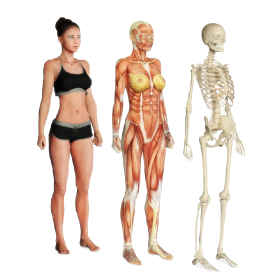 Anatomie - kurz